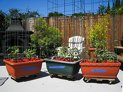 Grow boxes on wheels