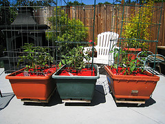 Grow boxes on wheels-2