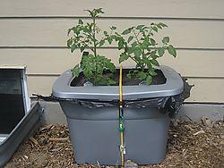 Tomatogrowbox-1