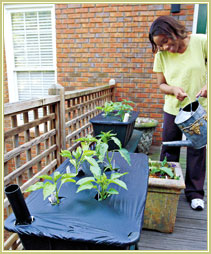 EarthBoxSoLiving-1