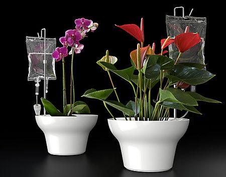 IV planter