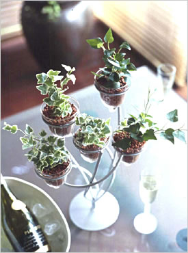 Plantsplantsivyhydro