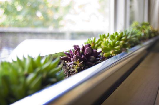 Inside Urban Green: Rain Gutter Windowsill Planter
