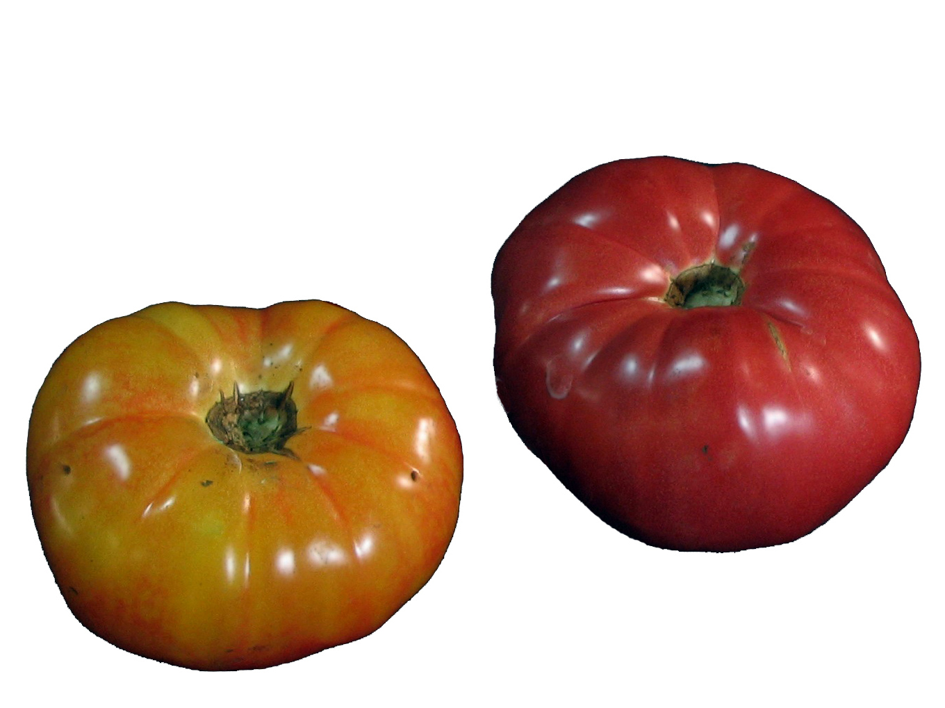 HeirloomTomatoes_white-1