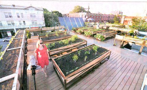 Inside Urban Green EarthBox - Rooftop vegetable garden ideas