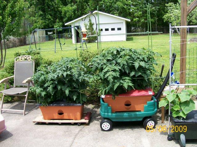 GardenPatchGrowBoxes