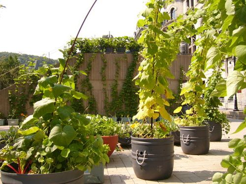 Inside Urban Green: Rooftop Gardening
