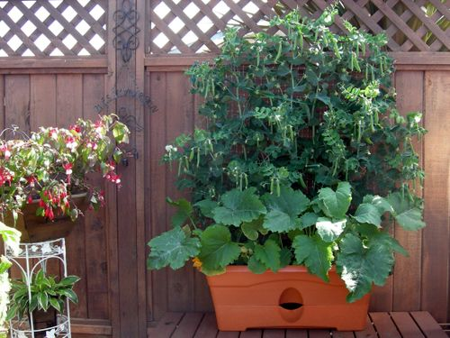 Inside Urban Green Safe City Vegetable Gardening Decorative And Productive