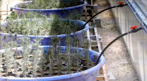 USDA Sub Irrigates In Wading Pool Planters