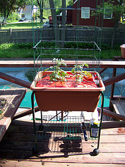 TomatoSuccessKitonCart