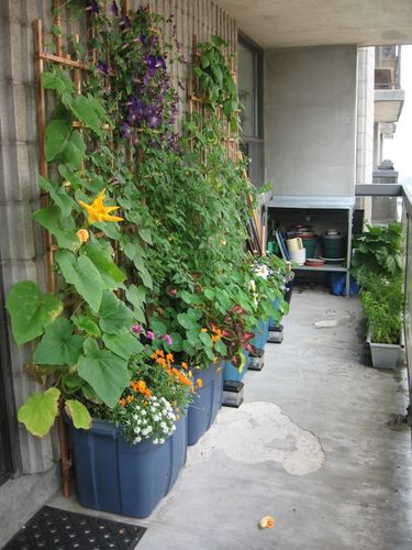 inside urban green balcony gardening