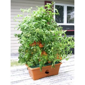 Homesteading in a condo: product review the grow box by garden patch.