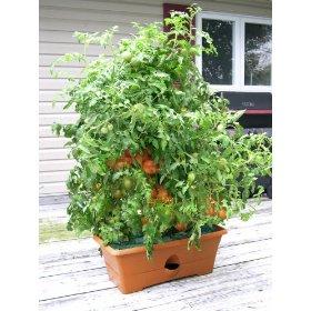 Garden Patch Grow Box Now On Amazon.com
