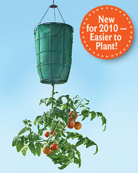 HangingTomato Planter -1