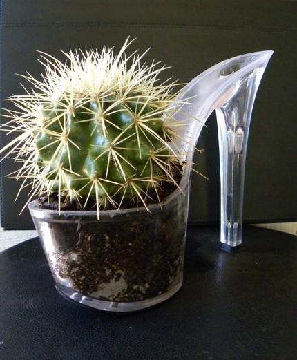 CactusSlipper