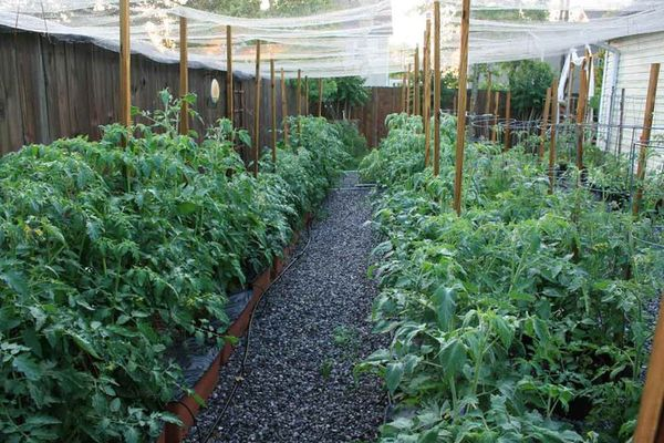 Inside Urban Green Sub Irrigated Planters Sips A