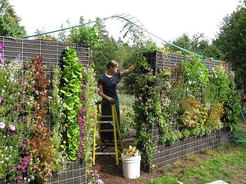 Inside Urban Green A Blog About An Outdoor Vertical Garden