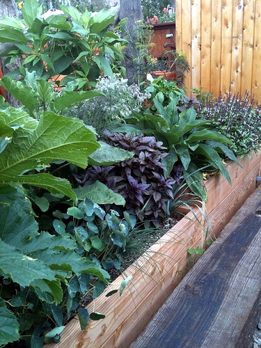 Sub-irrigated Raised Beds & Boxes