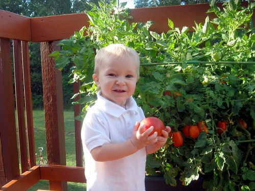 ChildGrowBoxTomato