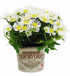 Flower pot_Thumbnail-240.jpg