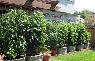 Charmant EarthTainer: How To Build Your Own Sub Irrigated Container Garden.  110421_TECH_earthtainer_IMG_9941