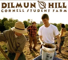 dilmun_logo.jpg