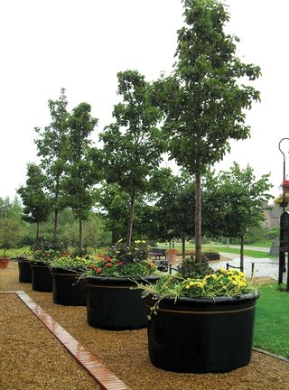 Tree Planter_Image 1