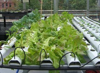 rooftop-garden-growing-table.JPG