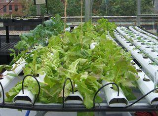 rooftop-garden-growing-table.JPG