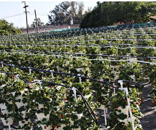 Inside Urban Green Is This Urban Or Peri Urban Farming Of
