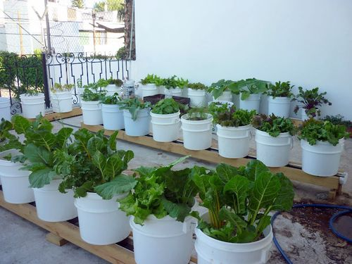 Inside Urban Green: Sack Gardening/