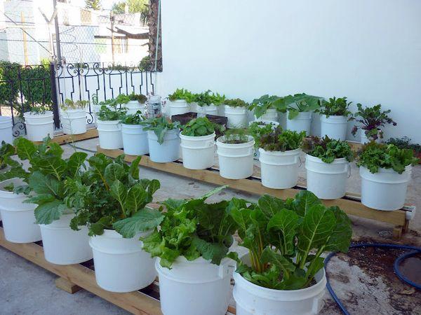 Inside Urban Green Altaira 187 A Rooftop Rain Gutter Garden