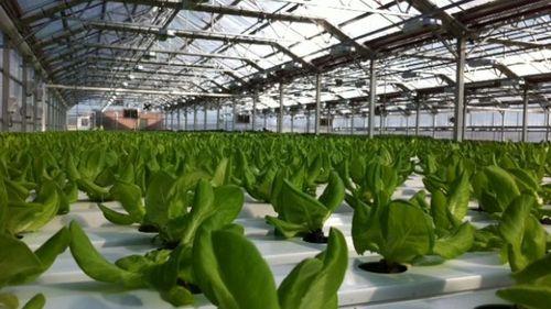 green_farming_rooftop.JPG