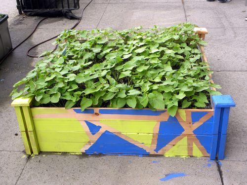 Sub-irrigated_Bean_Box_Planter
