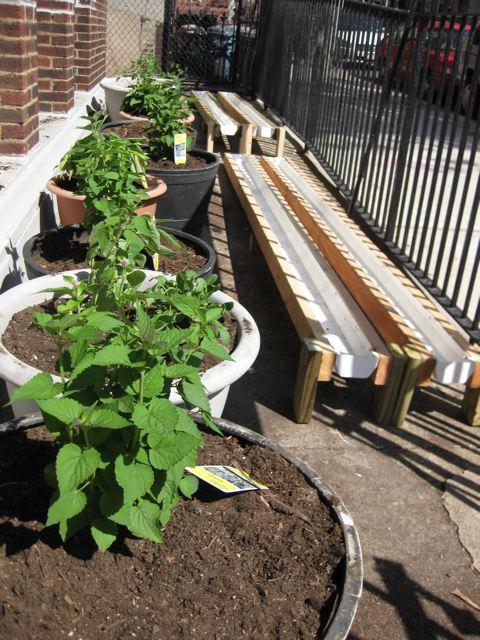 Inside Urban Green Rain Gutter Gardens Update