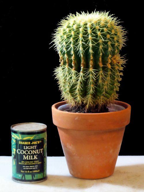 Cactus_SIP_11-30-12