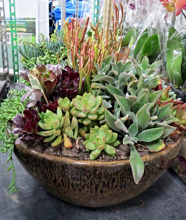 Inside Urban Green Spectacular Succulents At Costco