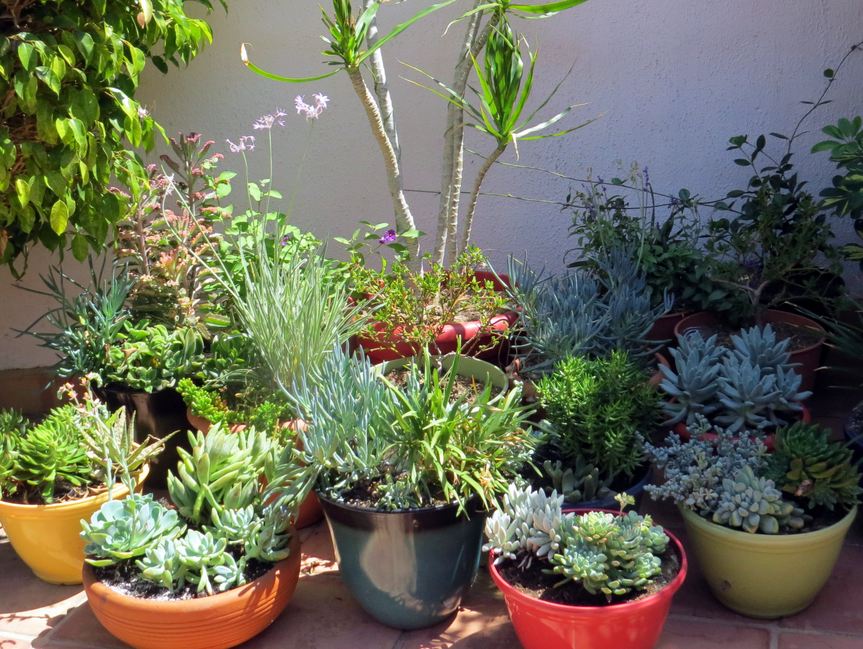 Elegant Green Plants for Garden