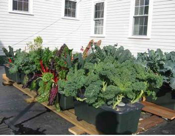 Radio_newport_roof_garden_11071