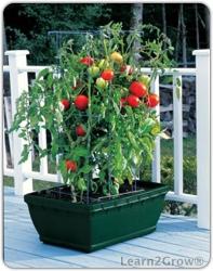 Tomatosuccesskit197x250